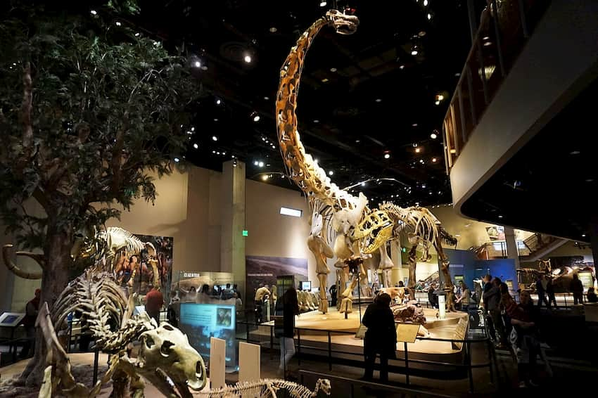 a collection of dinosaur skeletons in an exhibit at the Perot Museum