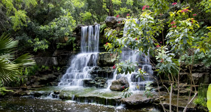 a waterfall and lush greenery in the Zilker Botanical Garden