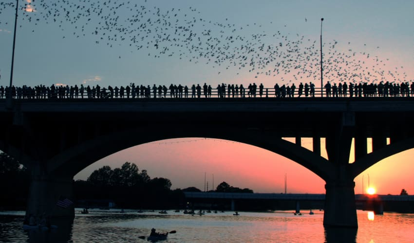 a group of onlookers watch as a swarm of bats fly into the sunset  on an Austin bridge